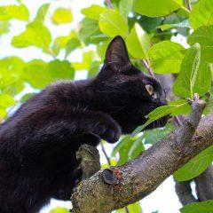 cat-1606569